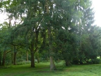Bäume im Kurpark