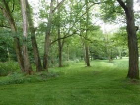 Die Bäume im Park