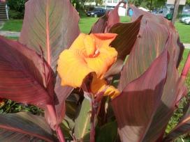 Lilienblütenbusch