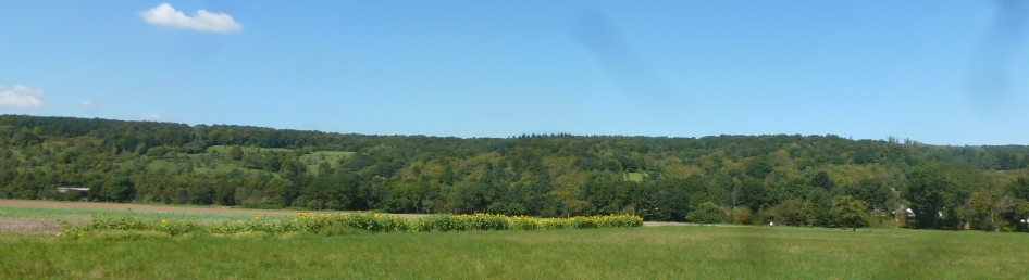 Sonnenblumenfeld in Bad Bodendorf