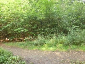 Waldweg Saaler Mühle