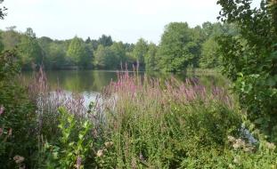 Am Ufer vom See mit Wildblüten