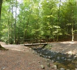 Bachlauf von der Saaler Mühlensee