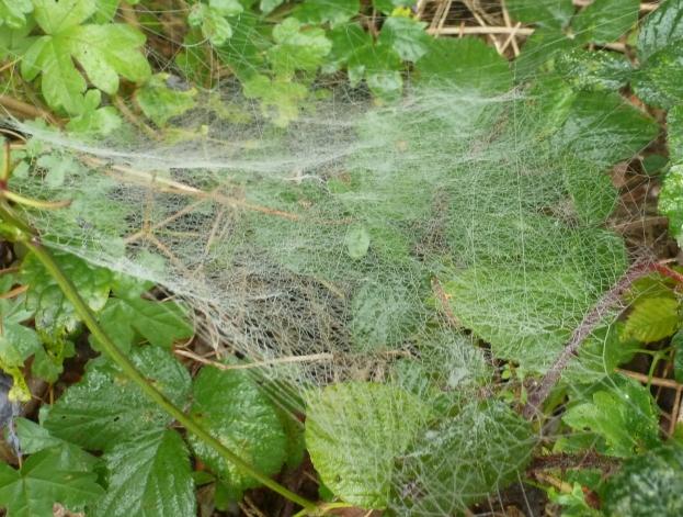 Spinnennetz am Morgen