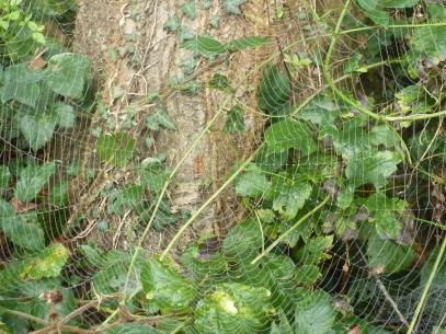 Die Spinne am Baum mit ihrem Netz