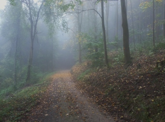 Die Wanderung im Wald im Morgennebel