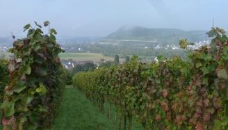 Die Weinberge zu Luhrsdorf
