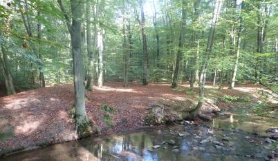 Der Tümpel im Wald