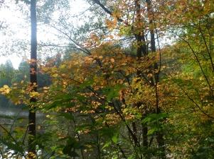 Herbstbäume in all seine schönsten Farben