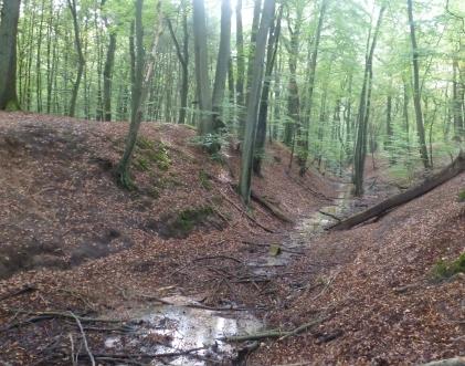 Bachlauf am austrocknen im Wald