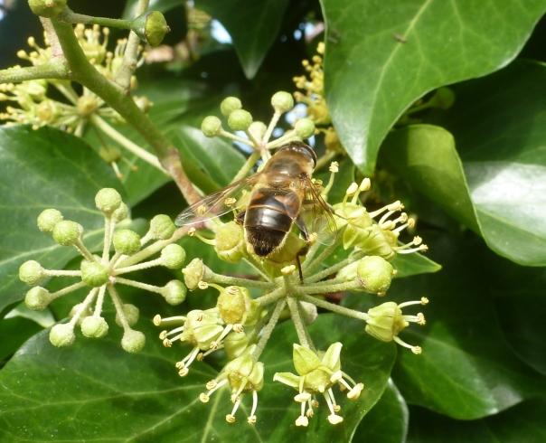 Wilder Blütenbusch mit Biene