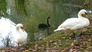 Die drei ganz friedlich besammen