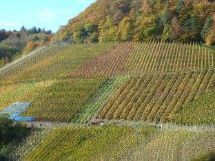 Die Weinberge in Dernau
