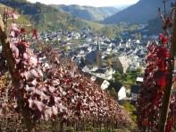 Rote Weinbergblätter und Weinort Dernau