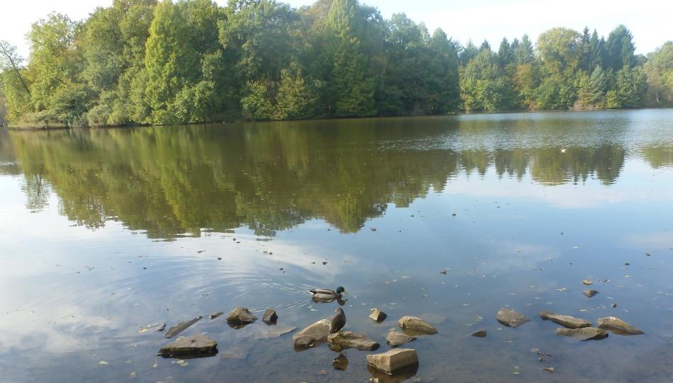 Der Saaler Mühlensee