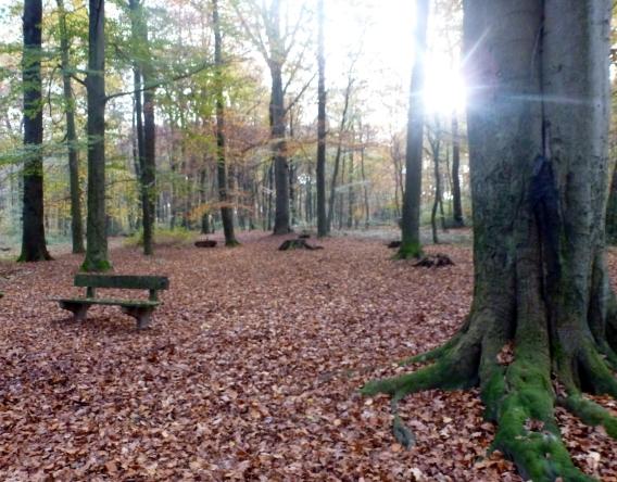 Der Herbstwald
