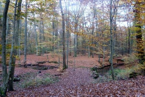 Auch der Herbstwald hat seine schönen Seiten