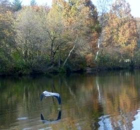 Der Reiher im Flug über den See