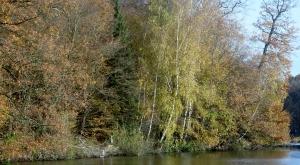 Der Reiher am Waldrand