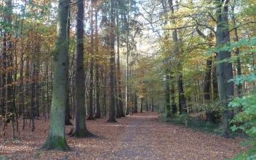 Unser Liebling Wanderweg zum Saalermühlensee