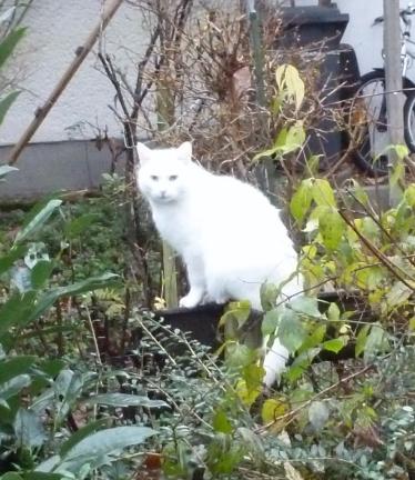 Die Katze wartet am Mauseloch