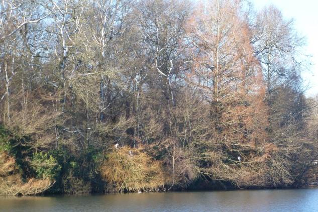 Am Saaler Mühlensee