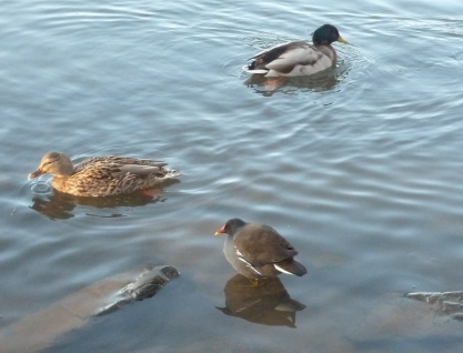 Die 3 Enten am See