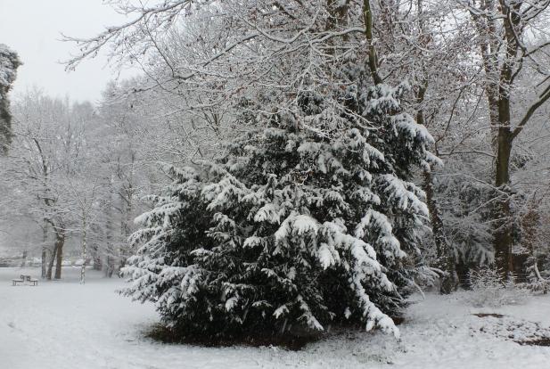 Der Tannenbusch bedeckt mit Schnee