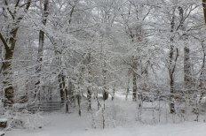 Der Winterwald