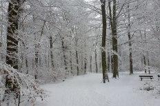 Waldweg zum Saalermühlen See