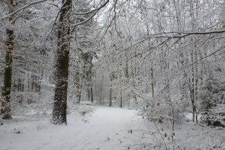 Winterwald Erholungsgebiet Saaler Mühle