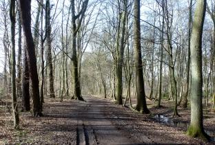 Der Waldweg vom Frühling noch keine Spur