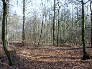 Der Wald noch im Winter schlaf