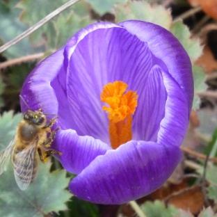 Ein Biene ist auch schon da