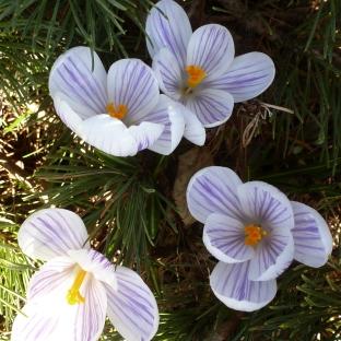 Sind diese Blüten nicht wunderschön