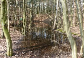 Wassertümpel an der Saaler Mühle