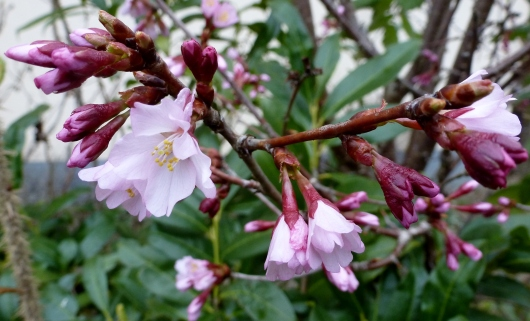 Schöne Frühlingsblüten