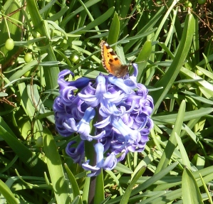 Frühlingsblüte mit Schmetterling