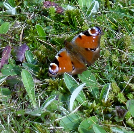 Schmetterlinge fliegen wieder