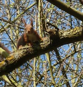 Eichhörnchen ganz schön neugierig