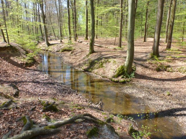 Der kleine Bach im Wald vom Erhohlungsgebiet