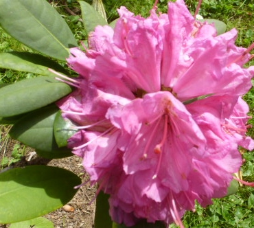 Wunderschöne Blüte