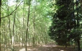 Wald Saaler-Mühle Erholungsgebiet
