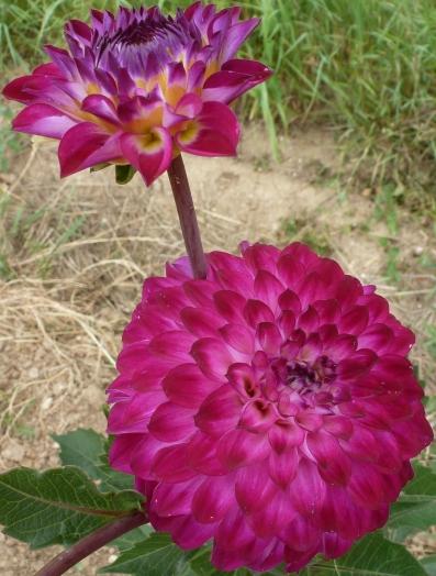 einmalige Blüte eine besondere Form
