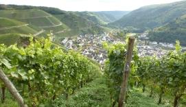 Weinberg mit Blick auf Weinort Dernau