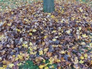Die Herbstblätter