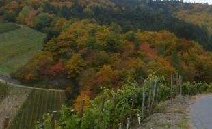 Wunderschöne Herbstlandschaft