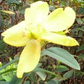 Wunderschöne Blüte im Dezember