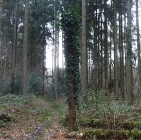 Der Wald an der Saaler Mühle