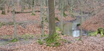 Bachlauf vom Saaler Mühlensee